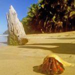 Excursions in Las Terrenas - beaches in las terrenas, rental in las terrenas, villas, houses, apartments in las terrenas